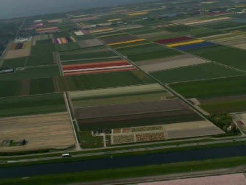 AERIAL Dutch flower fields, North Holland province
