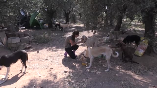 dutch lisanne hillen living in western turkey reaches out to stray animals providing food and shelter lisanne hillen came to turkey after she met her... - working animals stock videos & royalty-free footage