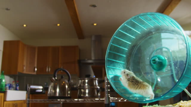slomo dwarf hamster runs in wheel in kitchen - イングランド南西部点の映像素材/bロール