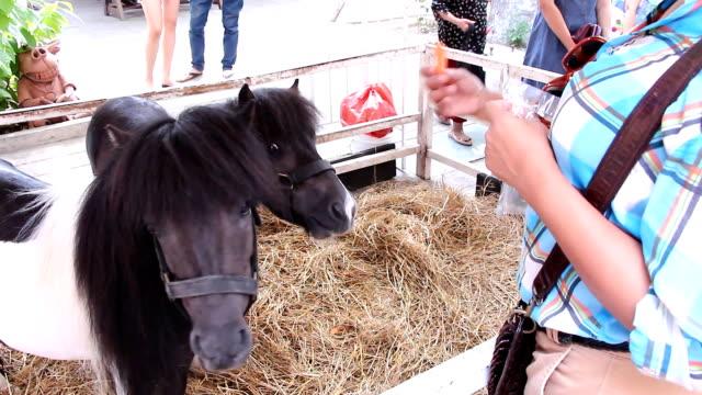 zuckerhut horse - zugpferd stock-videos und b-roll-filmmaterial