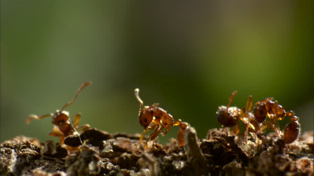 Dying ants twitch on branch.