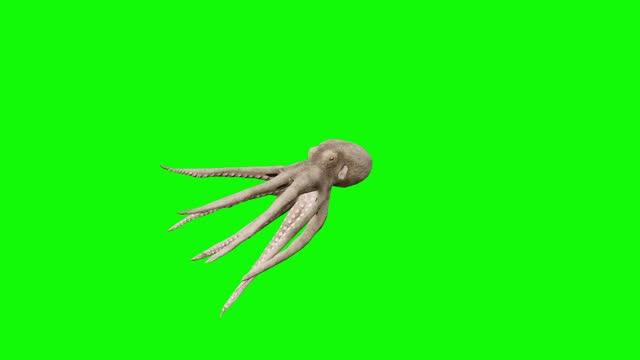 stockvideo's en b-roll-footage met stervende octopus op groen scherm. het concept van dier, wild, spelen, terug naar school, 3d animatie, korte video, film, cartoon, organisch, chroma sleutel, karakter animatie, ontwerpelement, thema's set, loopable - tentakel