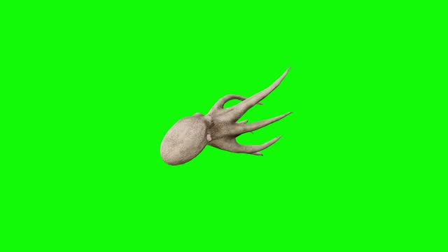sterbender oktopus auf grünem bildschirm. das konzept der tier, tierwelt, spiele, zurück zur schule, 3d-animation, kurzes video, film, cartoon, bio, chroma-schlüssel, charakter-animation, design-element, themen gesetzt, loopable - matrose stock-videos und b-roll-filmmaterial
