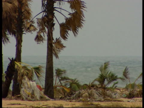 dying palm trees following the india ocean tsunami in 2004 - 2004 indian ocean earthquake and tsunami stock videos & royalty-free footage