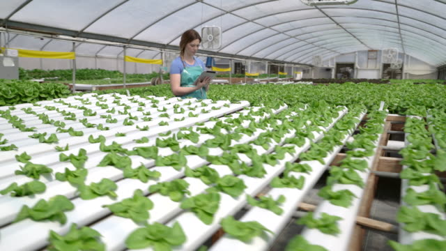Dynamic Move Young woman surrounded by vegetables on a hydroponic farm