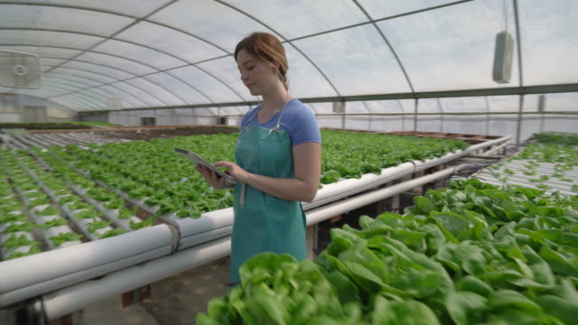 dynamic move, young woman walking through rows of vegetables in a greenhouse - young women stock videos & royalty-free footage
