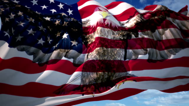 eagle american flag - bald eagle stock videos & royalty-free footage