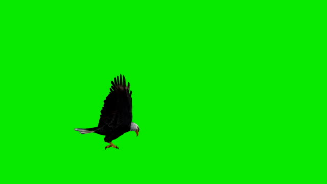 Eagle Attack Green Screen (Loopable)