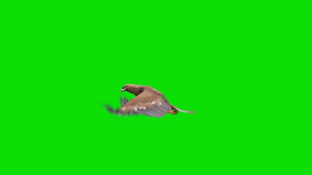 eagle flying animation on green screen. the concept of animal, wildlife, games, back to school, 3d animation, short video, film, cartoon, organic, chroma key, character animation, design element, loopable - golden eagle stock videos & royalty-free footage