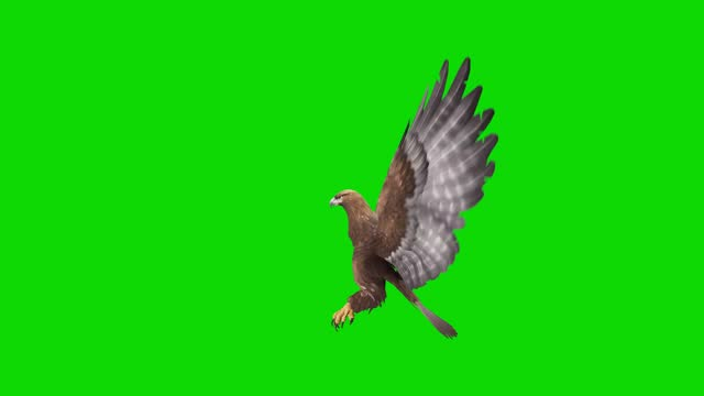 eagle flying animation on green screen. the concept of animal, wildlife, games, back to school, 3d animation, short video, film, cartoon, organic, chroma key, character animation, design element, loopable - falcon bird stock videos & royalty-free footage