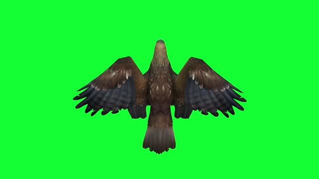 eagle flying, top view, loopable - claw stock videos & royalty-free footage