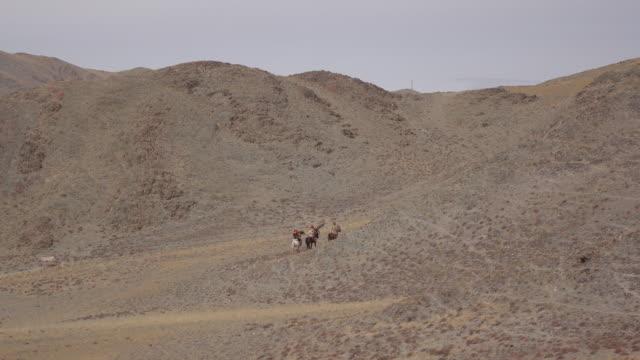 vidéos et rushes de eagle hunters riding horses with golden eagles - altai mountains, mongolia - mongolie indépendante