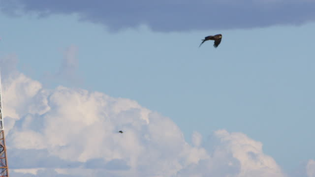eagle with other eagles on sky shot - bald eagle stock videos & royalty-free footage