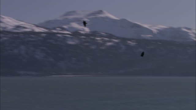 eagles fly over a debris-covered beach and toward snow-covered mountains. - log stock videos & royalty-free footage