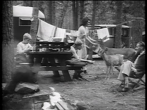b/w early 1930s family sitting at picnic table feeding deer at campsite / california / newsreel - deer family stock videos and b-roll footage