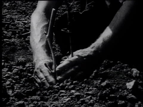 1945 reenactment early american settlers planting seeds in fields/ united states - frank capra video stock e b–roll