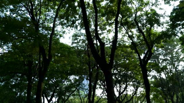 Frühherbst im Wald. Die Sonne scheint durch die Bäume.