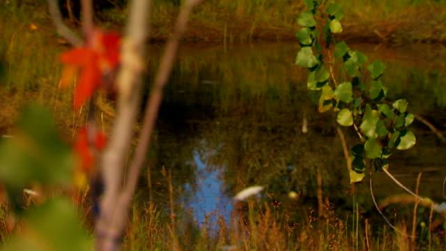 Early autumn leaves on tree, rack focus