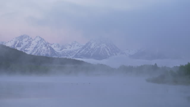 early morning bird flying over the snake river at grand teton national park - grand teton stock videos & royalty-free footage