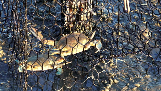Early Morning Crab Pot at Low Tide