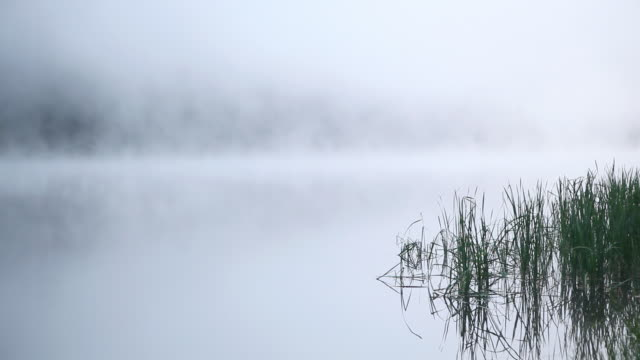 HD early morning fog on lake background