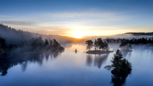 early morning in the forest, norway - sunrise dawn stock videos & royalty-free footage