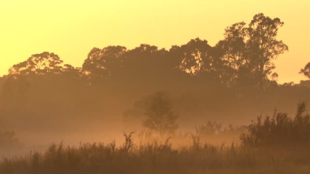 early morning, mist laying low in a paddock, soft pastel colours from the sun rise make the mist look golden / orange sun and rays, shines between... - frost stock videos & royalty-free footage