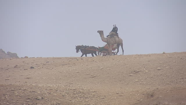 early morning misty view of a mounted policeman on a camel keeping watch and horse carriage waiting for tourists to descend upon the giza plateau. - camel stock videos & royalty-free footage