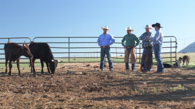 early morning ranchers in animal pen at work - animal pen stock videos & royalty-free footage