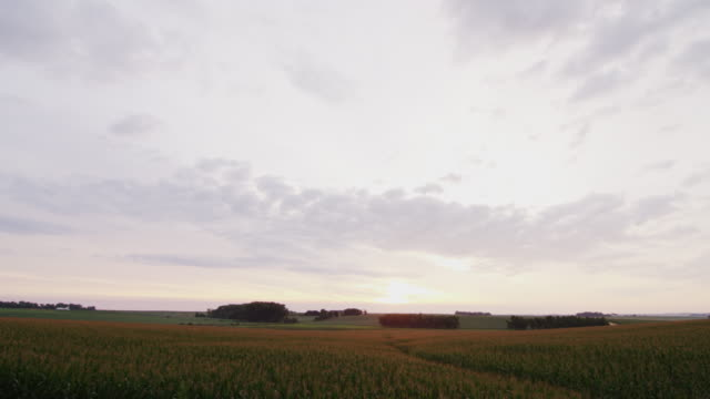 early morning rural agricultural vista featuring a sunrise, fields of corn, sky and clouds. - ländliches motiv stock-videos und b-roll-filmmaterial