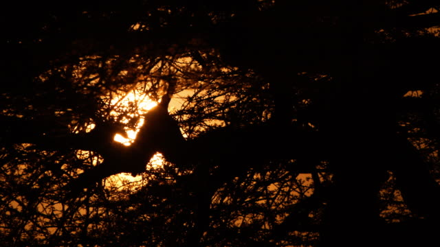 Early morning sun through tree branches