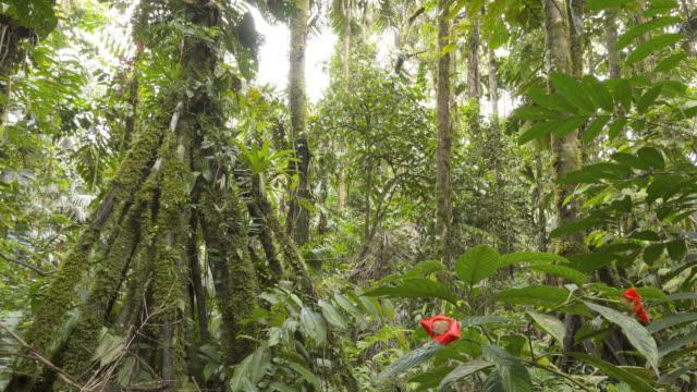 vídeos de stock, filmes e b-roll de early morning time-lapse of the interior of tropical rainforest - estática