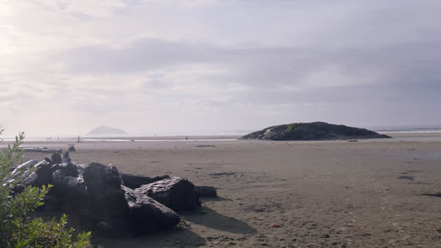 Early morning view of a remote Tofino beach as a bird flies overhead.