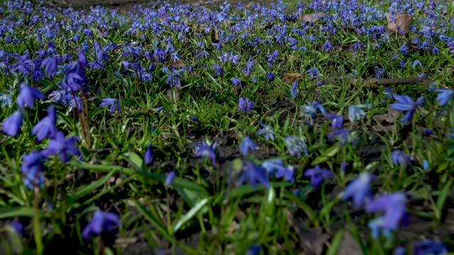 early spring blue bells to bloom at alexandra place park on march 09, 2021 in london, england - navy stock videos & royalty-free footage