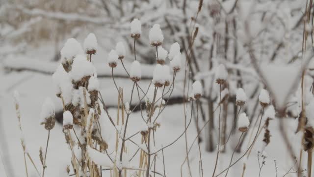 early spring snowfall - ベルガモット点の映像素材/bロール