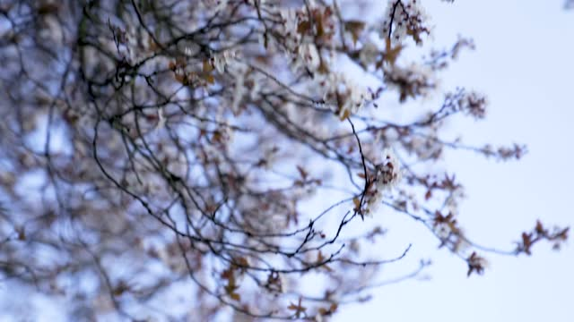 early spring weather has brought cherry blossom trees to bloom at alexandra place park on march 09, 2021 in london, england - blossom stock videos & royalty-free footage