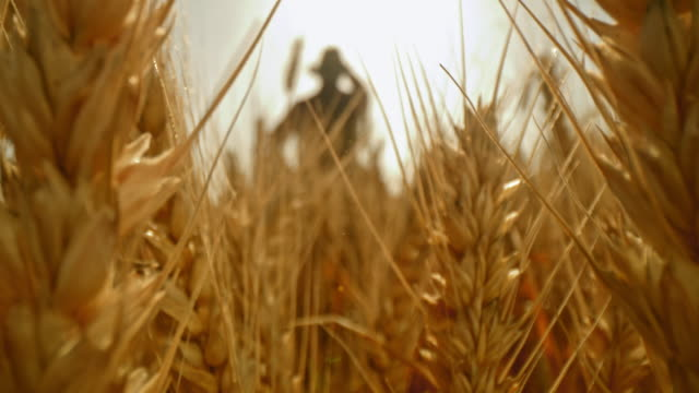 vídeos de stock e filmes b-roll de ds ears of golden wheat against a farmer standing in the field - pessoa irreconhecível