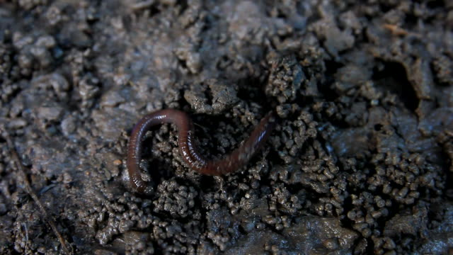 earthworm on the dirt - worm stock videos and b-roll footage