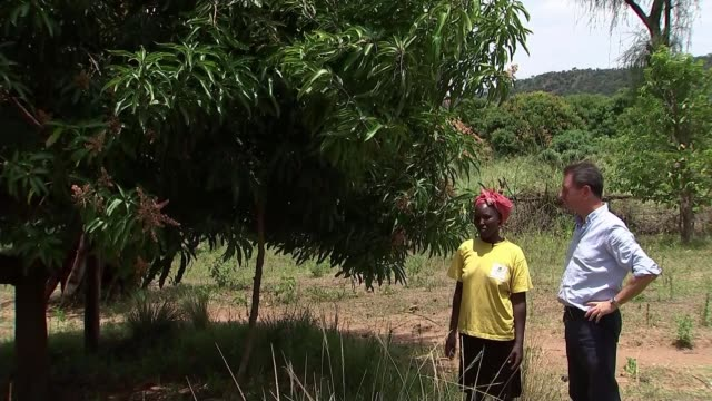 east africa plagued by worst locust infestation for 70 years kenya kitale mama churito along with reporter looking at mango tree gvs mango tree... - infestation stock-videos und b-roll-filmmaterial
