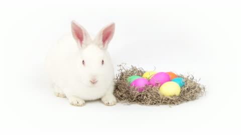 vídeos y material grabado en eventos de stock de conejo de pascua - pascua