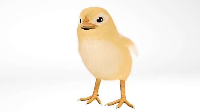 easter chick talking on white background - chicken bird stock videos & royalty-free footage