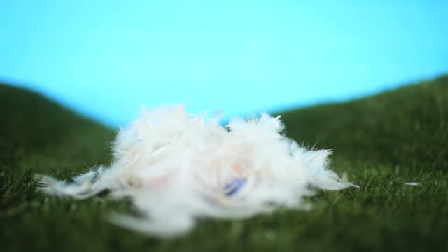 vidéos et rushes de nid d'oeuf de pâques surprise - pâques