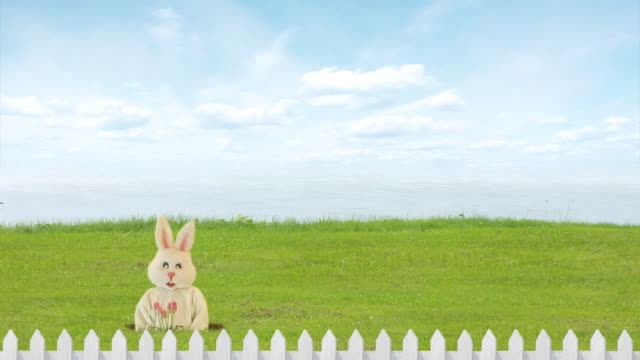 ostern rabbit - osterhase stock-videos und b-roll-filmmaterial