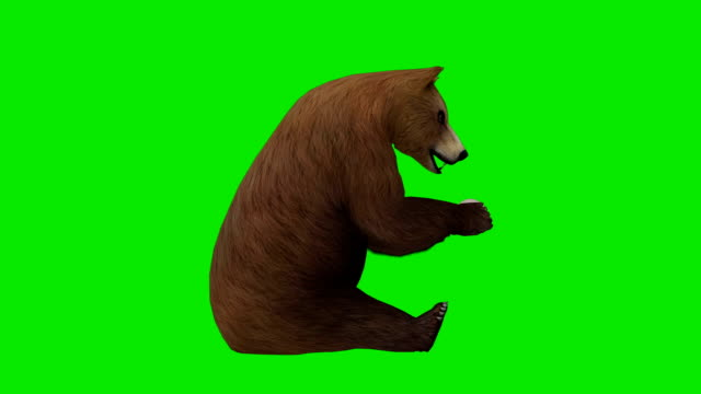 eating bear green screen (loopable) - bear stock videos and b-roll footage