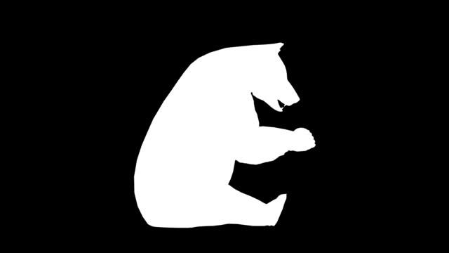 vídeos y material grabado en eventos de stock de comer bear (en bucle) - pata com garras