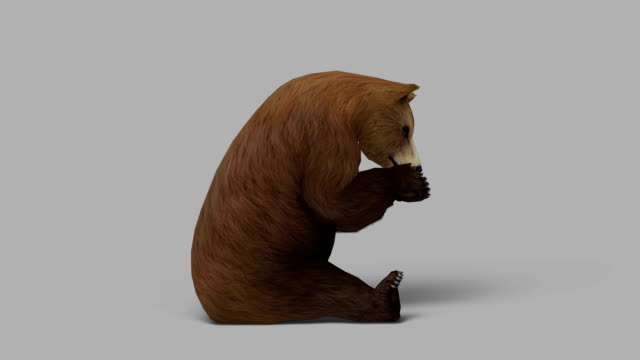 Äter björnen med alfakanal (Loopable)