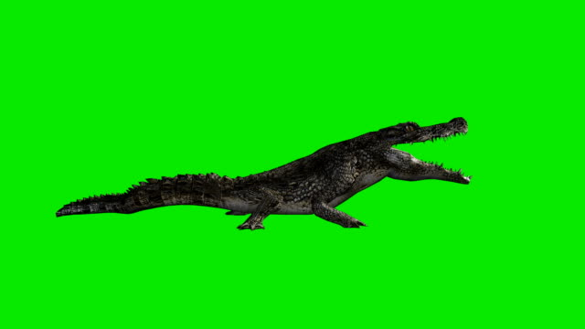 Eating Crocodile Green Screen (Loopable)