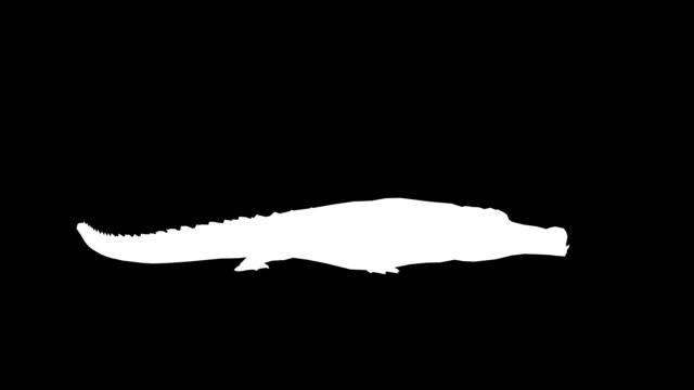 vídeos y material grabado en eventos de stock de comer de cocodrilo (en bucle) - pata com garras
