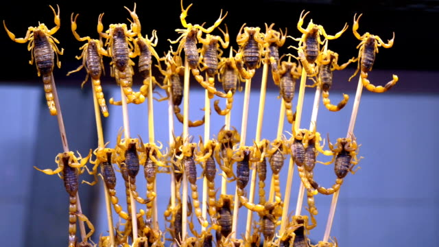 vídeos de stock e filmes b-roll de eating scorpions in china - inseto