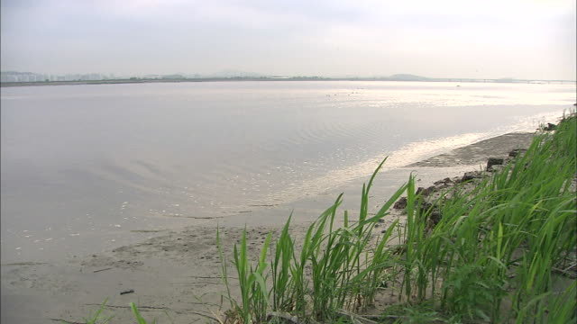 ebb tide scene of janghang wetland's mud flat, goyang, kyonggi-do province, south korea - kyonggi do province stock videos and b-roll footage